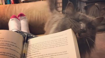 bookish cats, cats, books and cats